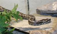 Schlangen Spanien